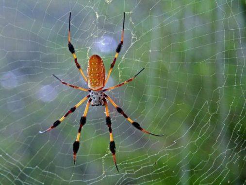 Nằm mơ thấy con nhện là điềm gì, đánh con gì chắc ăn nhất?
