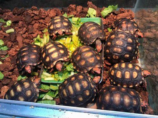 Mơ thấy rùa là điềm lành hay điềm dữ, đánh con gì chắc ăn nhất?
