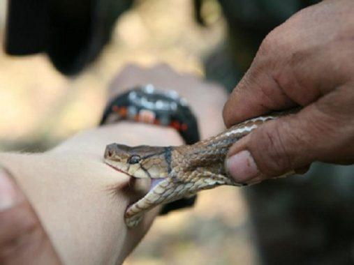 Nằm mơ thấy bị rắn cắn là điềm lành hay dữ, đánh con gì chắc ăn nhất?
