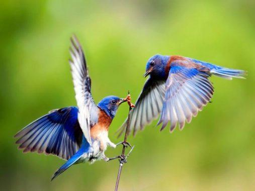 Chiêm bao thấy con chim nên đánh con xổ số nào là ăn chắc
