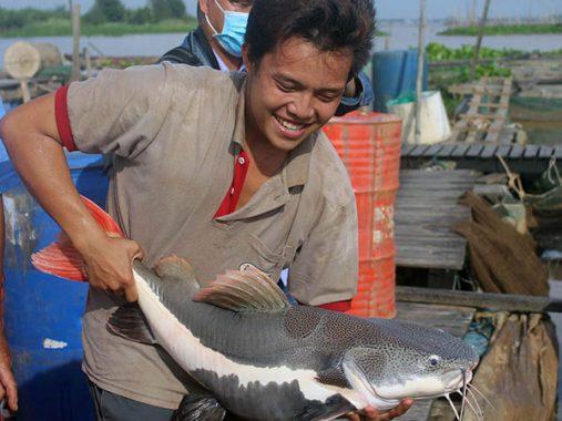 Mộng mị thấy cá trê mang ý nghĩa gì về con số đề